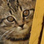 Ich gründe einen Tierschutzverein (Ironie)