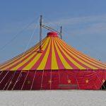 Deutsche Bundesregierung spricht sich gegen ein Haltungsverbot von Wildtieren in Zirkussen aus