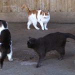 Auswertung der Umfrage Wie soll mit streunenden Haustieren umgegangen werden?