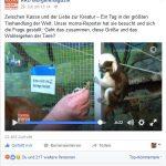 Wie Tierrechtler abdrehen