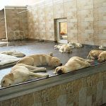 PeTA greift erneut Zoo Zajac an