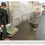 Tierschützerin stiehlt Hund von Obdachlosen