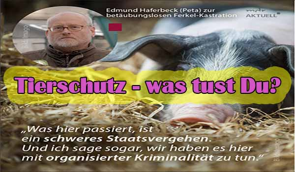 Tierschutz - was tust Du? Screenshot: Facebook